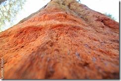 Sequoia-2-2