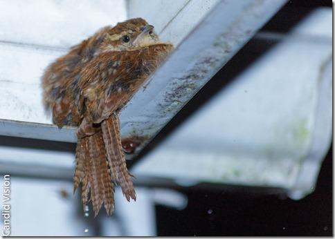 Sheltering Bird